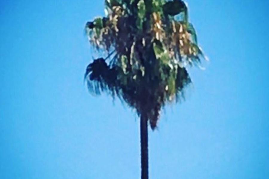 Blå himmel, palmer, sol och varma vindar är rätt härligt ️😎 Men snart är det dags att åka hem. Kram #santiago #chile #palm #blåhimmel