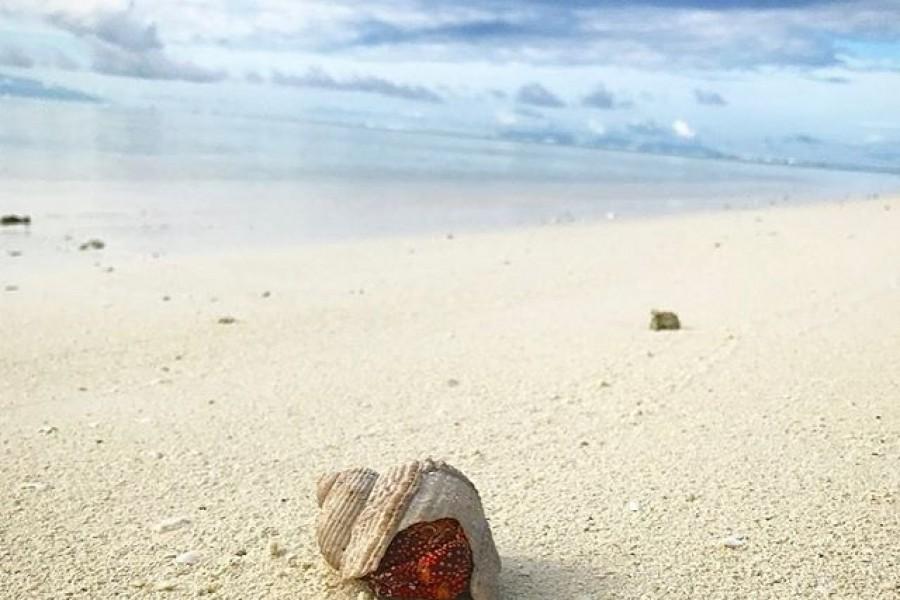 Född i kräftans tecken kan jag känna en koppling till eremitkräfta. Den har sitt skal för att skydda sin mjuka och känsliga kropp. Jag är också känslig och kryper ibland in i mitt skal för att skydda mig 🏻 Men just nu njuter jag bara av tystnaden och stillheten på en öde strand och tänker att precis som eremitkräfta, sakta men säkert, ta ett steg i taget. Kramar och kärlek från andra sidan jorden ️#strand #eremitkräfta #stillhet #eftertanke #livet #världen #kärlek #kram
