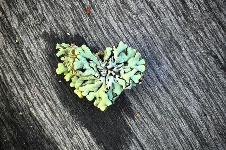 Ute och fixar lite på balkongen och upptäcker detta magiskt, vackra mosshjärta  Litet som min lillfingernagel. Visst är det vackert? Önskar en fortsatt fin dag! Kram #grönt #hjärta #mossa #vackert #magiskt #fantastiskt #naturensunder #kärlek #kram