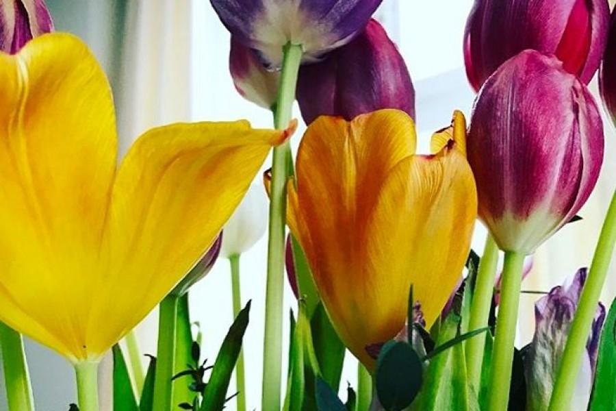 En bukett tulpaner på väg att vissna är också vacker. Fortfarande färgstarkt och stolt. Och när jag tittar ut genom fönstret i dag och ser snö och blåst så värms jag av dessa färger! Hoppas ni får en fin dag! Kram! ️#bukett #tulpaner #färgstark #vacker #stolt #onsdag #haenfindag #tahandomdig #tahandomvarandra #kram