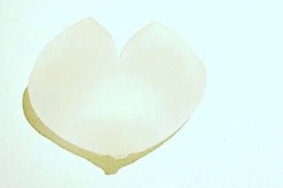 Ett vackert, vitt blomblad likt ett hjärta på mitt vita köksbord. Med det önskar jag dig en vacker, ljus och hjärtlig start på en ny vecka  Ta hand om dig! ️ Kram #hjärta #ljus #hopp #kärlek #nyvecka #nystart #måndag #tahandomdig #tahandomvarandra #tavarapåtiden #kram #frånhjärtat