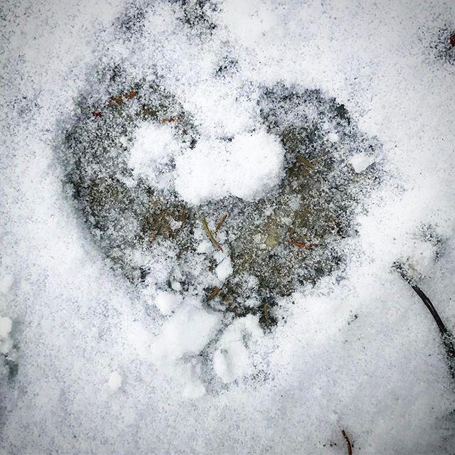 Ett vinterhjärta från min morgonpromenad! Varma kramar från ett snöyrigt Stockholm ️#vinter #hjärta #snö #snöyra #tisdag #kram